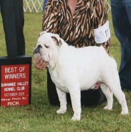 Dog Show, English Bulldog Puppies in Jacksonville, FL