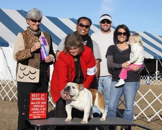 Show Dog, English Bulldog Puppies in Jacksonville, FL